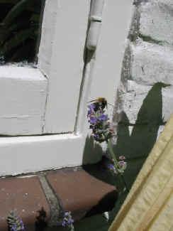 Onze tuin - Kleine lay outs het oppervlak ...